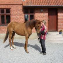 hest10
