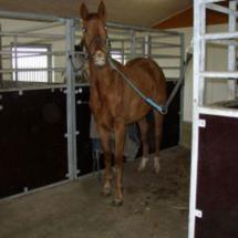 hest11