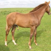 hest13