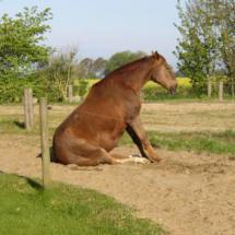 hest16