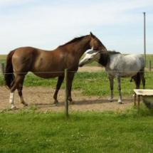 hest18