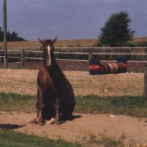 hest20